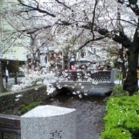 木屋町の桜♪