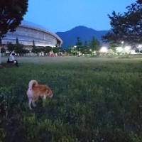 夕暮れ散歩