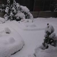 いきなり積雪(@_@)
