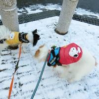 マフィー&シェイラー、雪の日の散歩