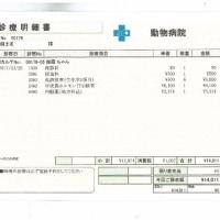 伽羅の肝炎&脳卒中&甲状腺障害日記(21)