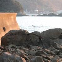 「岩です」ゴジラ&モスラ