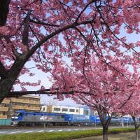 EF210「トヨタロンパス」と河津桜? (2017年2月18日 清水駅近く)