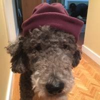 冬の帽子と手袋