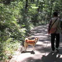 コキアを見に国営武蔵丘陵森林公園へ