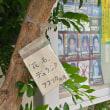藤沢駅北口交番の花