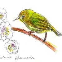 梅が咲いた。ので、鳥に描き加えました。