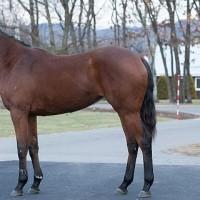 キャロット1歳馬近況写真(12月末・良く見えた馬)