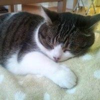 猫ちゃんの思い出ー最後の日