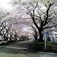 """人事発令 """" 出向ヲ命ズ """""""