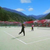 花桃シーズン 週末はテニス利用ありますが平日はOk♪