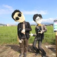 亀岡コスモス畑