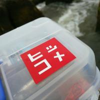 【渡良瀬川】6月7日(水)