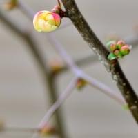 春の庭 その1