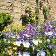 本日の写真【春のスペイン・グラナダは花がいっぱい vol.3】