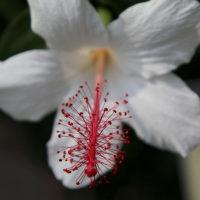 植物園・・・7