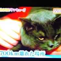 2/23 700kmを猫が戻ってきた 居眠りしていて見なかったよ