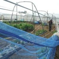 3月24~26日2泊3日春大根・トウモロコシ直播、エンドウ豆ネット設置