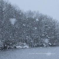 雪・雪・雪・・・・・