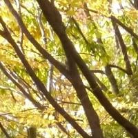 朱雀の庭いのちの森の吟行会