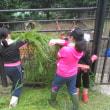 恒例!おびひろ動物園飼育体験学習が開催されました。
