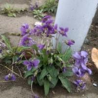 春、春、春‼