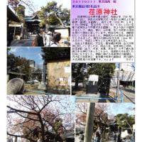 花巡り 「桜-その388」 荏原神社