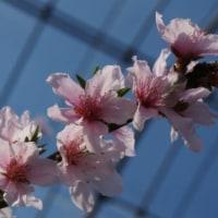 一足早く春を満喫