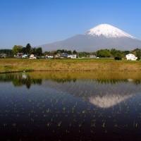 富士山が見える棚田・茶畑を巡る(静岡県・御殿場市の「上小林の棚田」)
