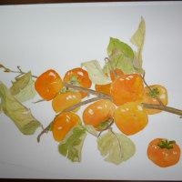 水彩画 柿