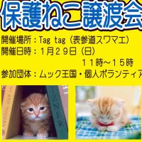 """""""ねこちゃんのお浄土会""""のお知らせ"""