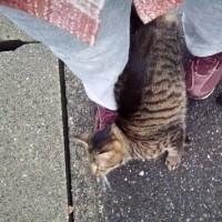猫散歩・代理店まで締め切りを持って行く