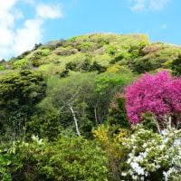 『花散歩』 高麗山麓