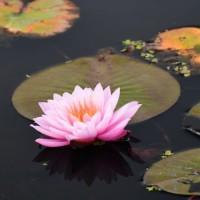 水田公園の花3・・・【いな】