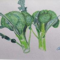 水彩画、プロッコリー (broccori)