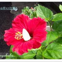 ☆まだ咲いてます(o^―^o)ニコ