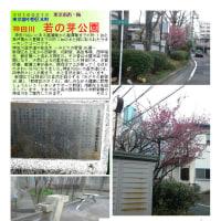 花巡り 「梅-162」  若の芽公園