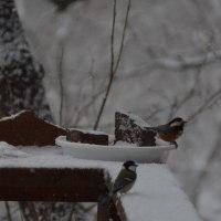 積もらない雪が吹雪く午後の森で音と色と香りと煙突の煙に神経を集中してコーヒー焙煎をする。