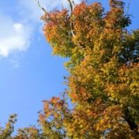秋を感じたくて・・・・