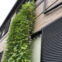 この夏の窓対策~グリーンカーテン報告