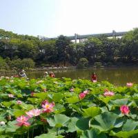 JR駅からハイキング「世界最古の花「大賀ハス」と千葉氏伝説の地から千葉みなとの海辺を散策」記 (6/23)