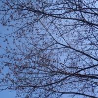花が咲き始めた 松山総合公園