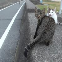 西畑海岸外猫2
