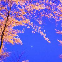 木星と桜花