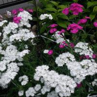 庭の花~♪