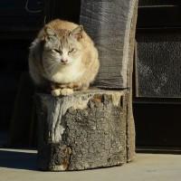 ~~~  あの時の猫の親子は、、、、今  ~~~