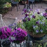 見納め 春の庭花