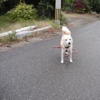 愛犬まるのナニゲない写真