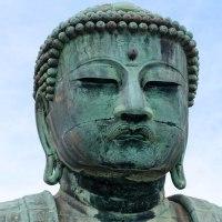 鎌倉大仏(高徳院)と紫陽花