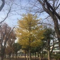 皇帝ダリア in 三鷹農業公園
